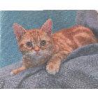 Коврик для мыши «Рыжая кошка», шелковый, 230х190х1.5 мм
